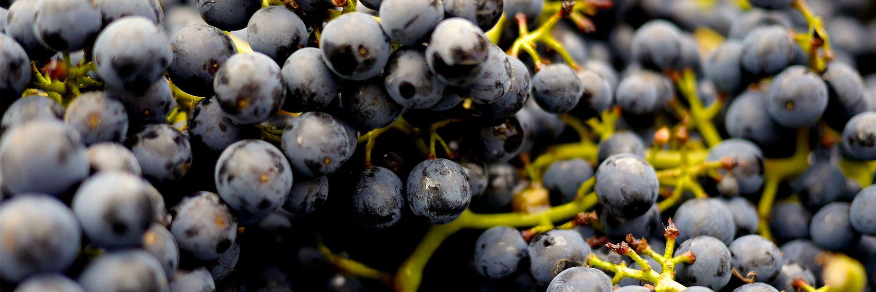 Vins Pravi